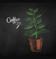 chalk drawn sketch of coffee tree sprout vector image
