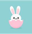 funny easter bunny inside egg vector image