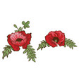 hand drawn red poppies isolated on white vector image
