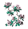 Hand drawn sakura branch with blossom cherry vector image
