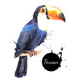 Hand drawn sketch watercolor tropical bird toucan