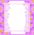 pink cosmos flower banner card border vector image