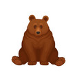 adorable brown bear sitting isolated on white vector image vector image