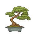 bonsai tree in pot vintage black engraving vector image