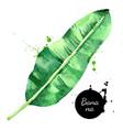 hand drawn sketch watercolor tropical leaf banana vector image vector image