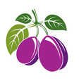 two purple simple plums with green leaves ripe vector image vector image