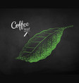 chalk drawn sketch of coffee leaf vector image vector image