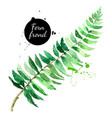 hand drawn sketch watercolor tropical leaf fern vector image