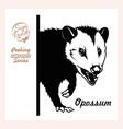 peeking opossum - face head isolated on white vector image vector image