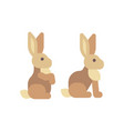 cute brown rabbit sitting flat icon vector image