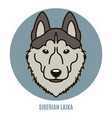 portrait of siberian laika vector image vector image