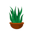 cactus with long green leaves in brown clay pot vector image vector image