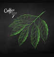 chalk drawn sketch of coffee branch vector image vector image