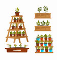 tree sprouts and plants in pots and wooden boxes vector image