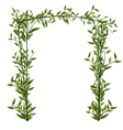 Arch Twined Bamboo Branch Green Leafs vector image vector image