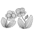 decorative pansies vector image vector image