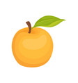 ripe apricot with small green leaf juicy and vector image