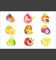 set of colorful watercolor fruits vector image vector image