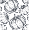 hand drawn sketched pumpkin seamless vector image vector image