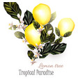 realistic lemon on a blooming branches vector image