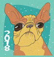 ridiculous portrait of breed french bulldog vector image