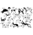 breeds dogs vector image vector image