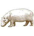 engraving of hippo vector image vector image
