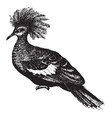great crowned pigeon vintage vector image vector image