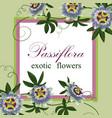 passiflora exotic postcard vector image vector image