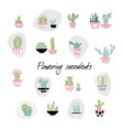 set succulents in hand drawn scandinavian style vector image