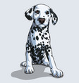 cute dalmatian dog sitting isolated vector image vector image