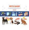 flat pet shop elements collection vector image