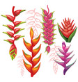 set of heliconia flowers vector image vector image