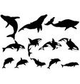 set of whale killer whale dolphin silhouettes vector image