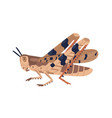 colorful locust wild winged vector image