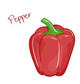 isolated cartoon fresh hand drawn red bell pepper vector image