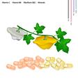 Pattypan Squash with Vitamin C B6 and B2 vector image vector image