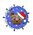 yorkshire terrier dog in santa claus hat vector image vector image