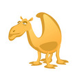 cartoon camel isolated on a white background vector image