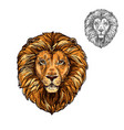 lion muzzle african wild animal sketch icon vector image vector image