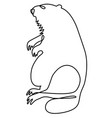 abstract marmot vector image