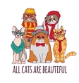 Group fashion pets hipster cats and sign isolate vector image