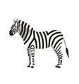 zebra isolated on white background portrait of vector image