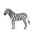 zebra isolated on white background portrait vector image vector image