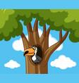 toucan bird in hallow tree vector image