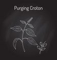 purging croton medicinal plant vector image vector image