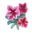 Watercolor flowers in classical style on a white vector image vector image