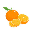 bright set of colorful juicy orange vector image