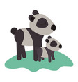 cartoon panda mom with cub over grass in colorful vector image vector image