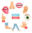 of human body parts vector image